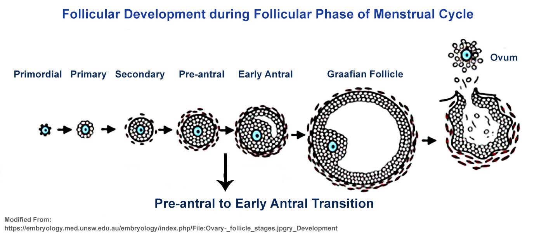 afc fertility test in kolkata antral follicle count test